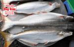 Cá bông lau tươi sống mua ở đâu tại TpHCM – giá bao nhiêu 1 kg