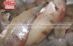 Cá Mó biển sống – mua ở đâu – giá bao nhiêu tại TpHCM hiện nay