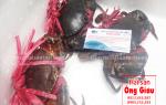 Cua Cà Mau – biển – ngon mua ở đâu TpHCM giá sỉ gốc bao nhiêu