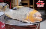 Cá Anh Vũ sống ở đâu – giá bao nhiêu tiền 1 kg – làm món gì ngon