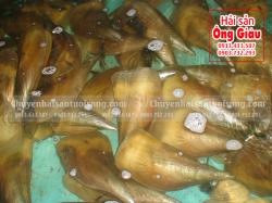 Sò Mai mua ở đâu – giá bao nhiêu tiền tại TpHCM – Sài Gòn