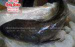 Cá bớp biển tươi sống bao nhiêu 1 kg – mua ở đâu – làm món gì ngon