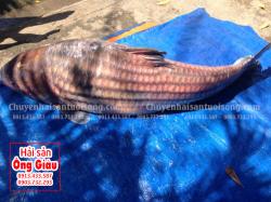 Giá mua bán cá Trà Sóc bao nhiêu 1 kg tại TpHCM hiện nay