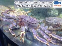 Cua hoàng đế-Cua vua-cua King Crab-Cua Alaska giá bao nhiêu