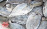Giá cá liệt tươi sống, nơi bán cá liệt tươi
