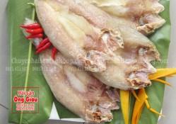 Giá bán cá lanh, nơi bán cá lanh rẻ nhất