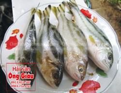 Địa chỉ mua cá căng tươi sống tại TP. Hồ Chí Minh hiện nay bao nhiêu