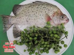 Giá bán cá nâu tươi sống nguyên con hôm nay, các món ngon dễ chế biến