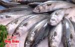 Cá thu nhật tươi sống ở tại TP. Hồ Chí Minh giá bao nhiêu 1kg