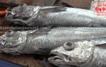 Cá hoki là cá gì – mua bán ở đâu tại tphcm – giá bao nhiêu tiền 1kg