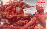 Mua tôm Crawfish ở đâu bán tại TpHCM – giá bao nhiêu tiền 1kg