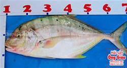 Nơi bán cá bè vàng tươi sống ngon đảm bảo sạch – an toàn tại HCM