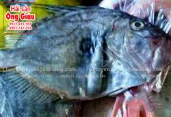 Cá mặt trời là gì – mua ở đâu trên thị trường TPHCM hiện nay