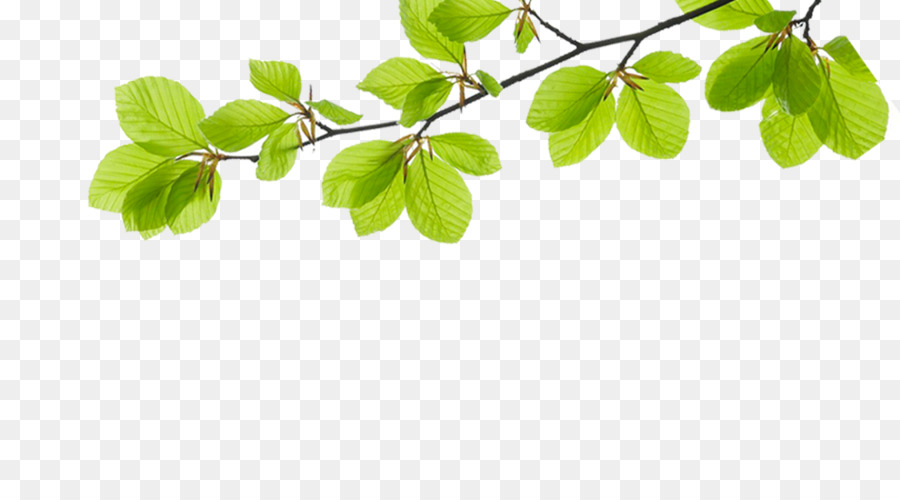 Template Cream Information Software - Green leaf foliage decoration