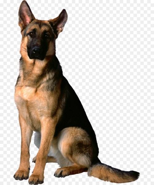 Medium Of German Shepherd Mixed With Husky