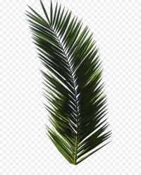 T-shirt Tropical Design Graphic design Logo - palm leaf ...