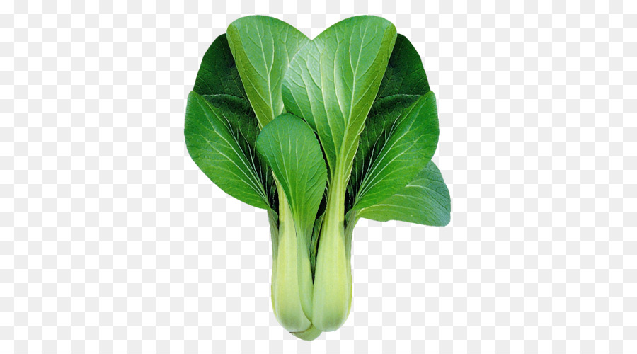Bok Choy Chinese Cabbage Leaf Vegetable Clip Art Bok