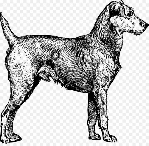 Medium Of Irish Dog Breeds