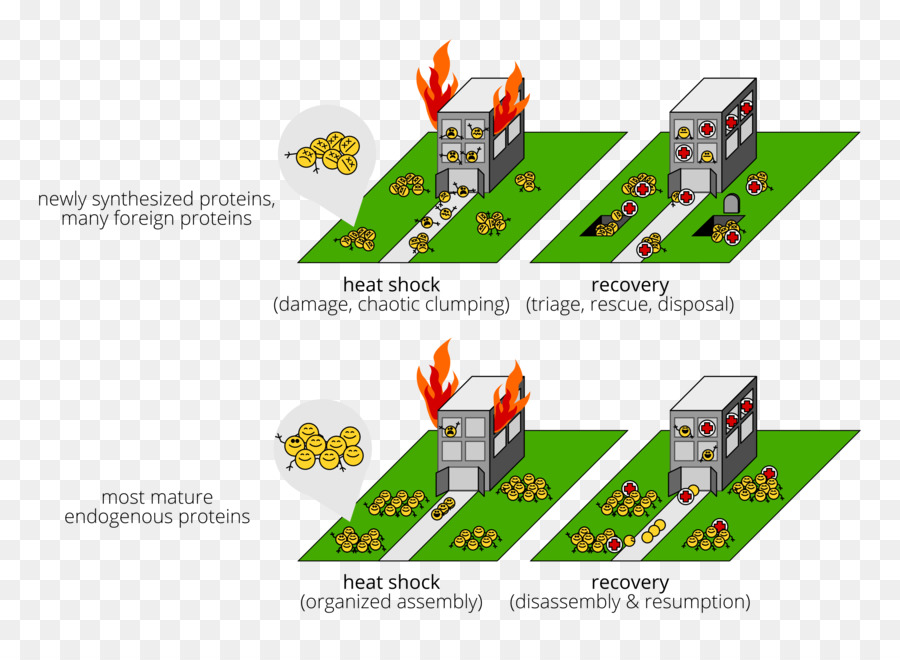 Protein aggregation Cell Chaperone Diagram - fire building png