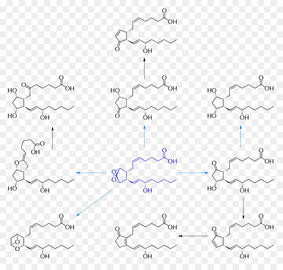 Prostanoid Prostaglandin H2 Eicosanoid Prostacyclin