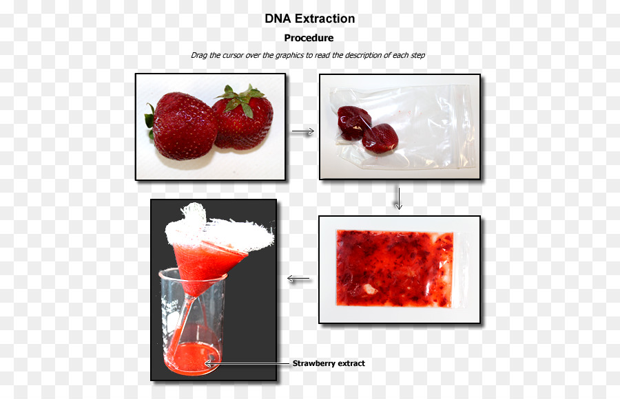 Strawberry DNA extraction Laboratory Biology - strawberry png