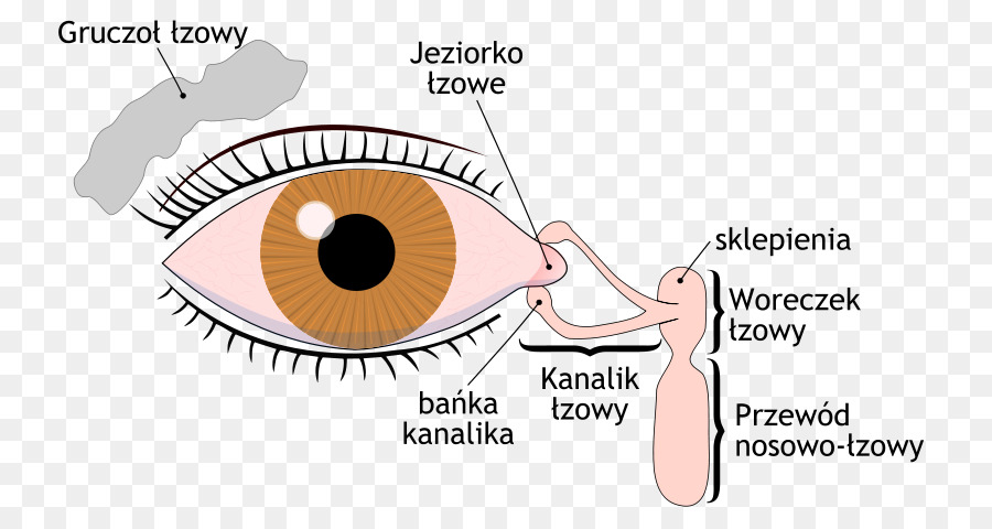 Dry eye syndrome Lacrimal gland Lacrimal sac Tears Lacrimal