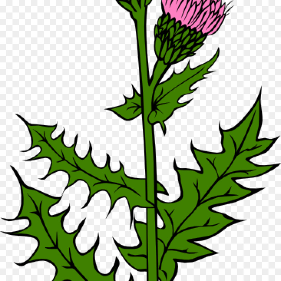 Unkraut Clipart Flag Of Scotland Thistle Clip Art Vector Graphics Bud Png
