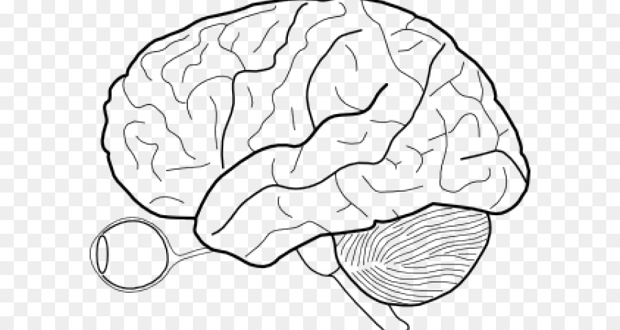 Clip art Outline of the human brain Vector graphics - brain png