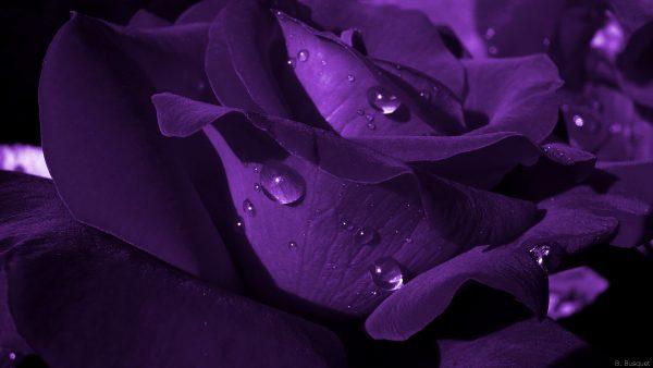 3d Leaves And Water Drop Wallpaper Beautiful Roses Wallpapers Barbaras Hd Wallpapers