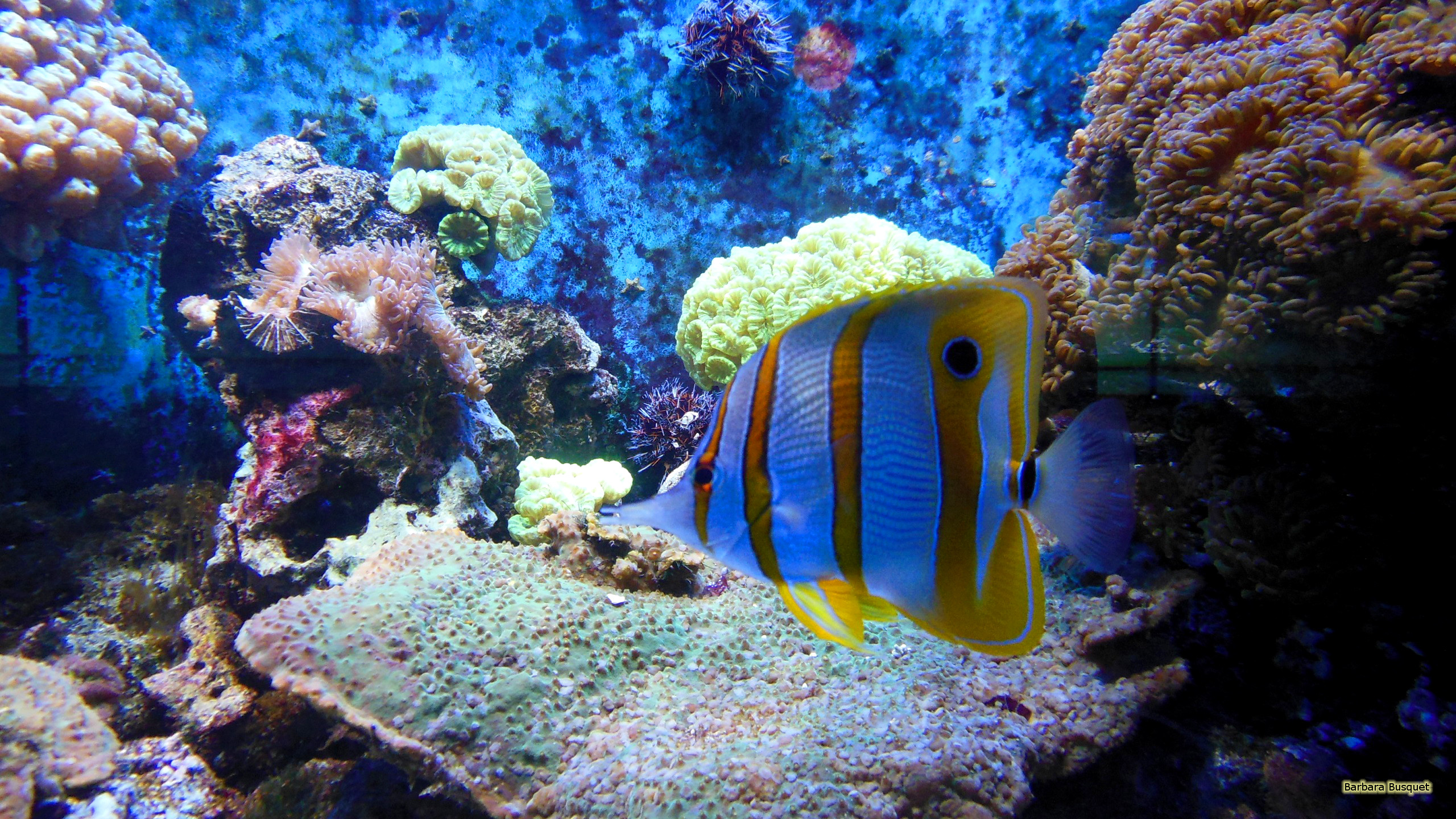 Fall In Love Mobile Wallpaper Tropical Fish And Anemones Barbaras Hd Wallpapers