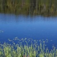 Shiny Lake