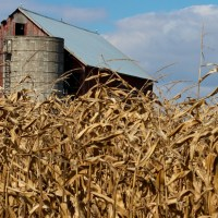 Corny Barn