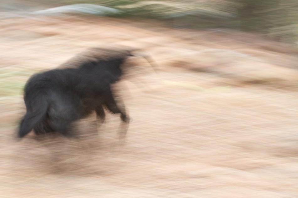 Fluid Dog in Motion