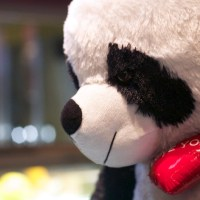 Panda Contemplative