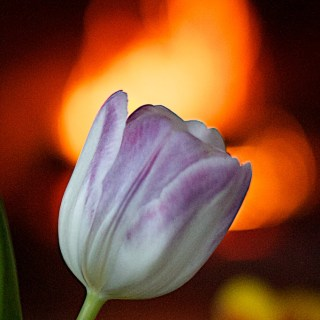 Flower and Flame
