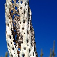 The Magic of Natural Textures