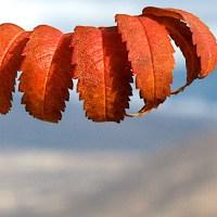 Leafy Grip