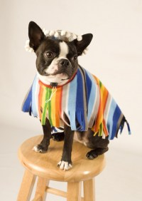 22 Unique Dog Costume Ideas for Halloween - The Barkpost