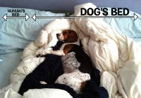 The Secret Reasons Why Humans Should Be Allowed in Dog Beds