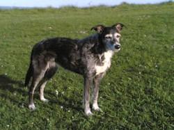 Small Of Irish Dog Breeds