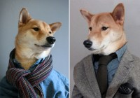 This Fashionable Dog Makes George Clooney in a Suit Look ...