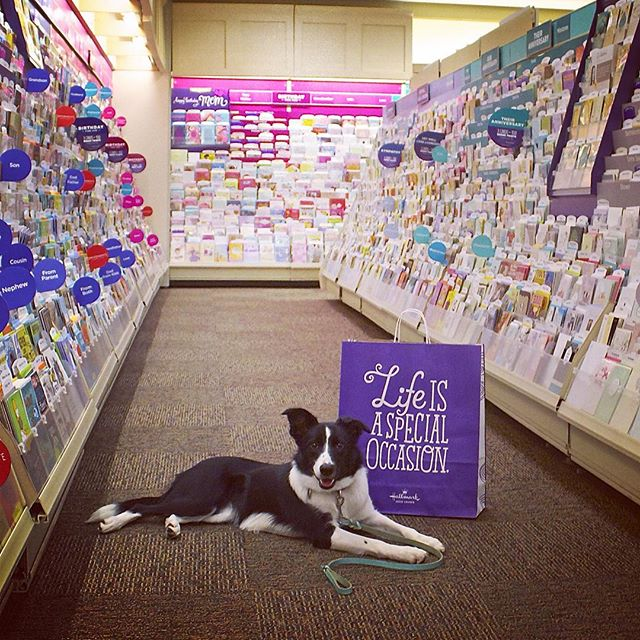 33 Dog Friendly Stores
