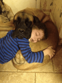 9 Realities Of Sharing A Bed With Your Dog - BarkPost