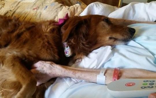 hospice dog 3