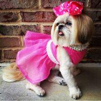 50 Fashion-Inspired Dog Names - BarkPost