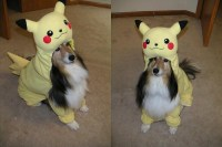 Geek Out Alongside Your Pooch With 17 Spook-Tastic Costume ...