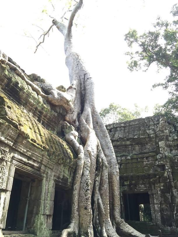 tree in building