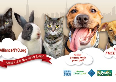 Pet Adoption Fair on September 7th in Union Square Park
