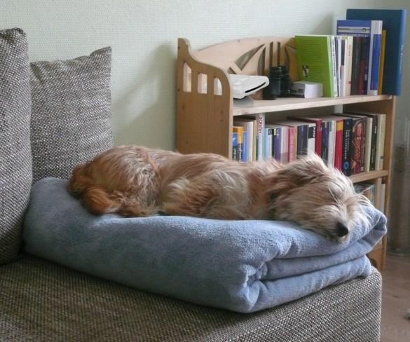 Air Angel_Dog Sleeping
