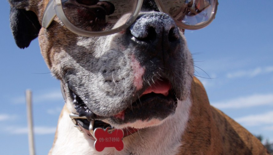 Monitor your pet's health at home